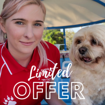 Never a better time to join the Aussie Pooch Mobile Dog Wash family